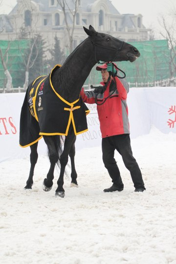 Negro, ridden by Hong Kong team's Guillermo Terrera, the Most Valuable Player, won the Best Playing Pony award
