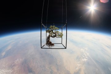 artist Azuma Makoto sent two pieces of botanical matter into the stratosphere, including a 50-year-old bonsai pine