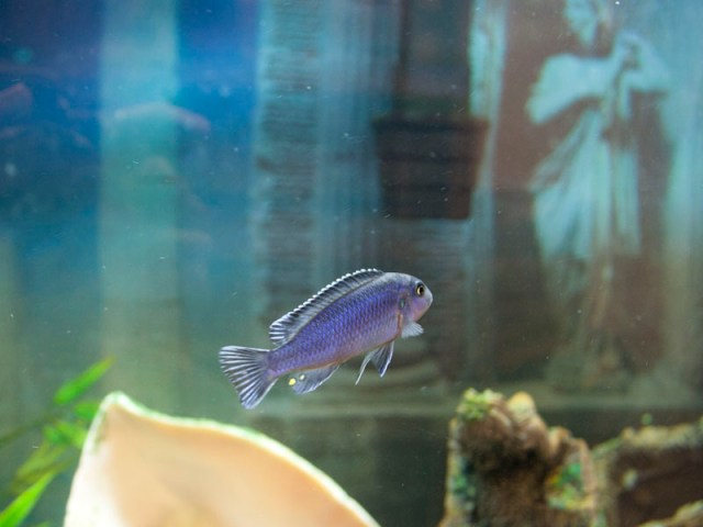 Fish Tanks and Fish Tank Maintenance Services by an Expert in Fish