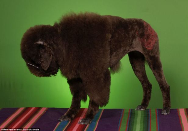 bison creative grooming