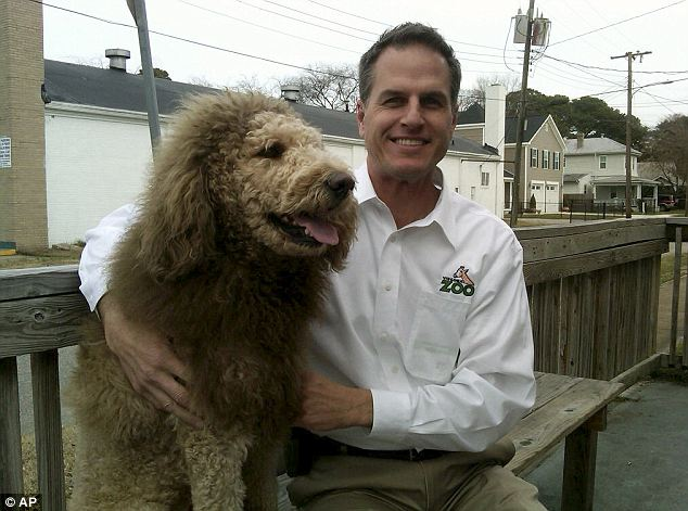 dog with lion mane
