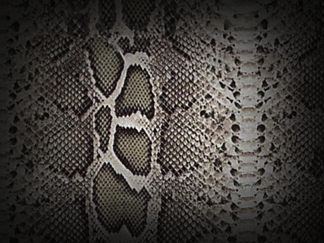 Textures___Snake_Skin_by_Loo_Lee