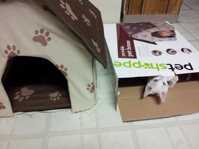 kedi kutusu