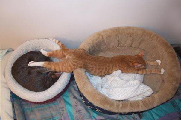 kedi yatış