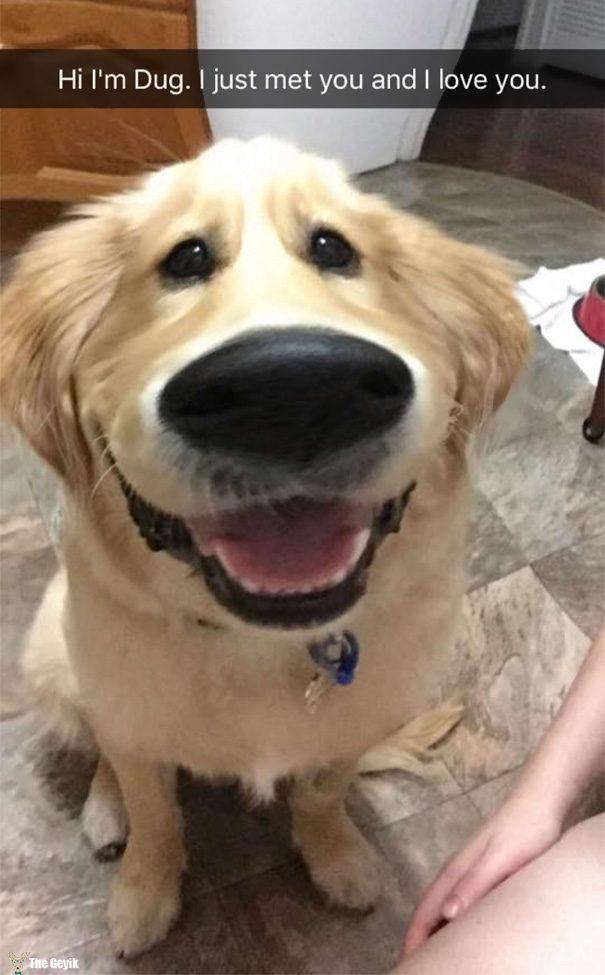 Evcil Hayvanları Snapchat Filtreleriyle Buluşturmak 1