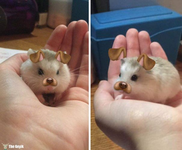 Evcil Hayvanları Snapchat Filtreleriyle Buluşturmak 2