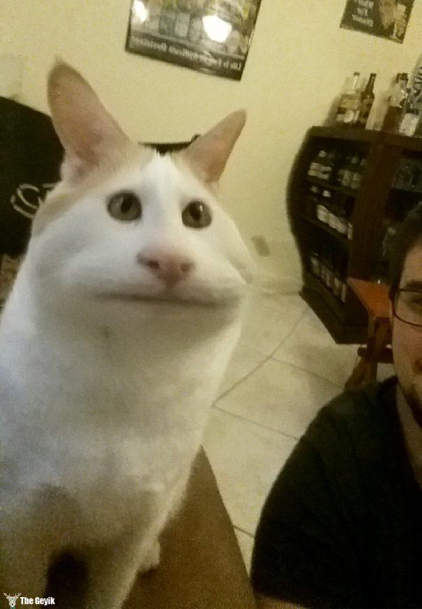 Evcil Hayvanları Snapchat Filtreleriyle Buluşturmak 6