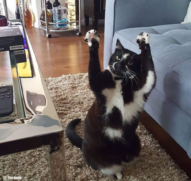 teslim olan kedi11