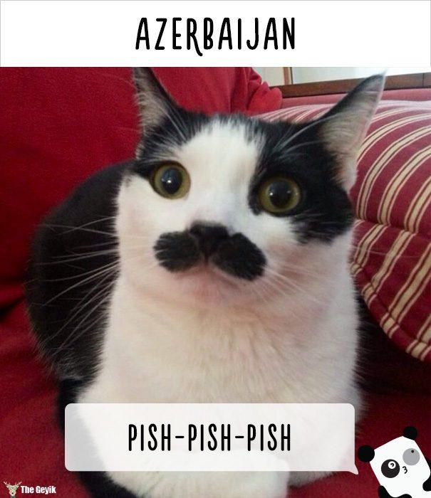 insanlar kedileri diğer dillerde nasıl çağırıyor 23
