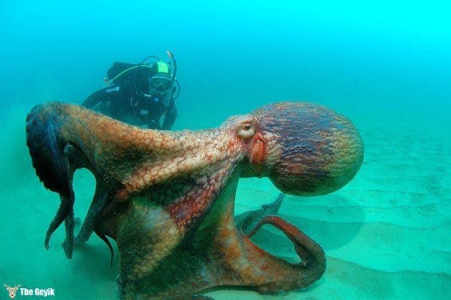 yuzmekten-korkmanizi-saglayacak-deniz-fotograflari-8