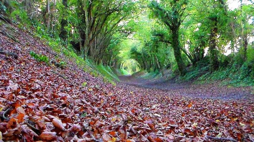 """tree tunnel"", ""Gordon Bryan"","