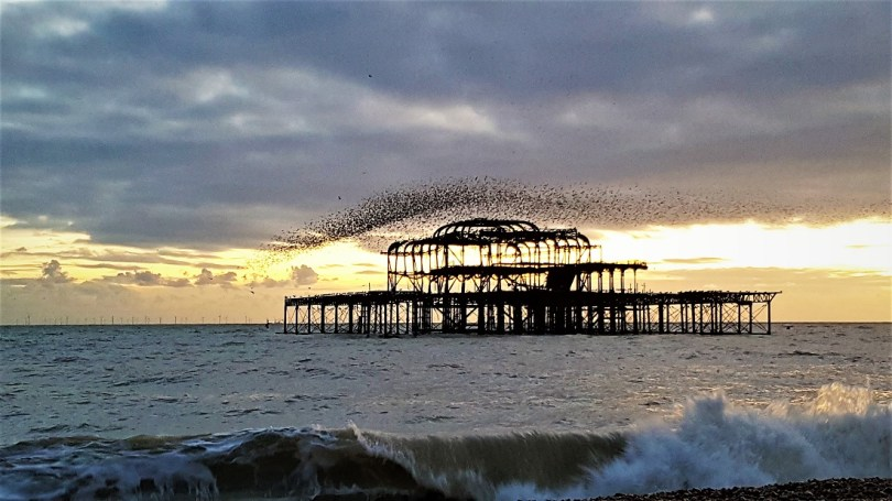 """Brighton"", ""murmuration"","