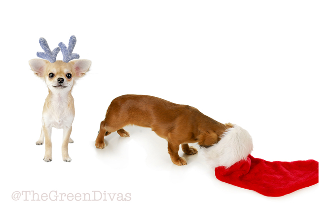 gift wrapping dogs for the holidays
