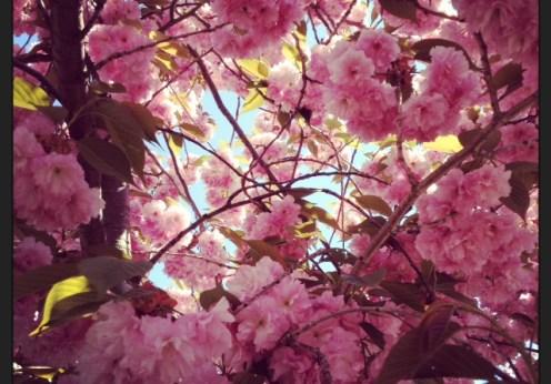 Green Diva HQ spring tree 2013