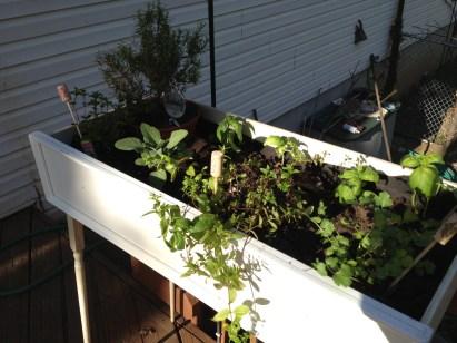 green diva mizar's repurposed dresser drawer into herb planter