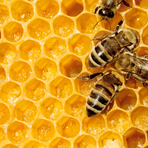honey comb with busy bees