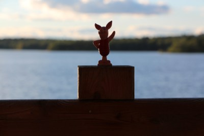 piglet at the lake house in maine