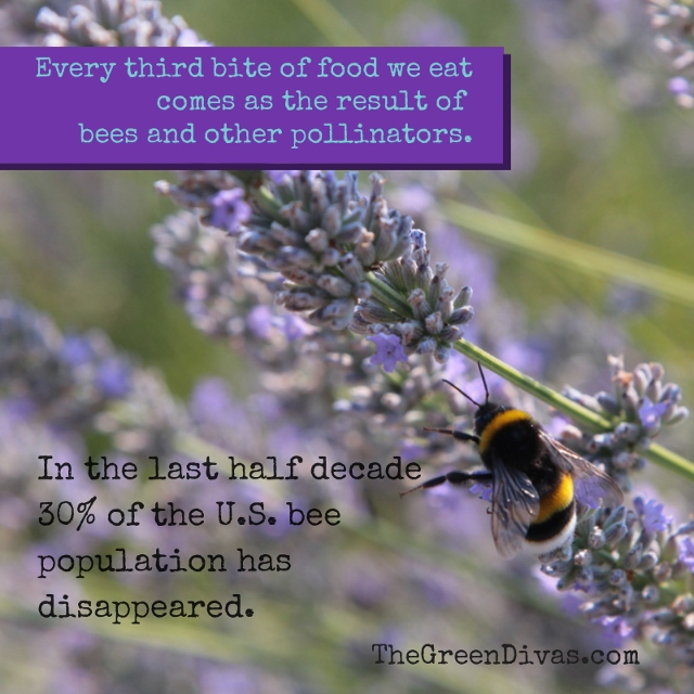 Save the bees! Every third bite of food we eat comes as (640x640)