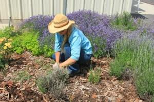 Woman weeding in the garden