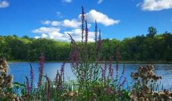 GD Meg's lake - gratitude post