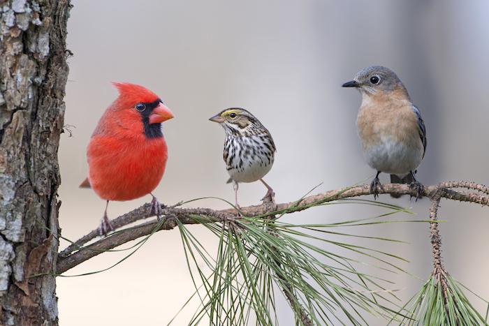 song birds in tree
