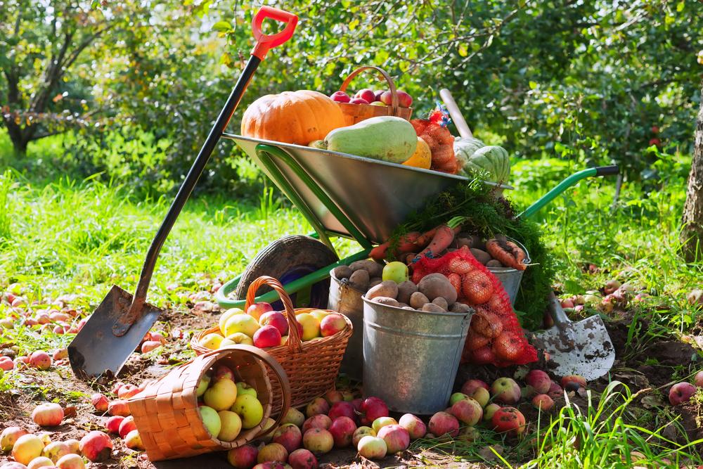fall october gardening
