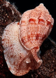 Living Shell