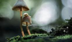 fantastic fungi photo by marianna armata