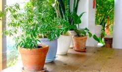 easy-to-grow houseplants anyone can grow on the green divas