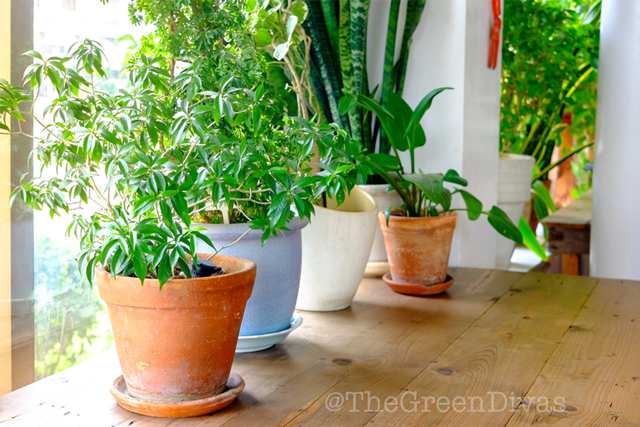 house plants anyone can grow on the green divas