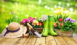 eco-friendly gardening on the green divas