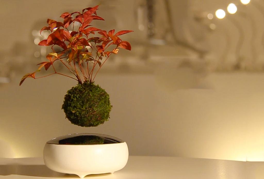 bonsai-levita Bonsais voladores, primer paso para crear jardines flotantes