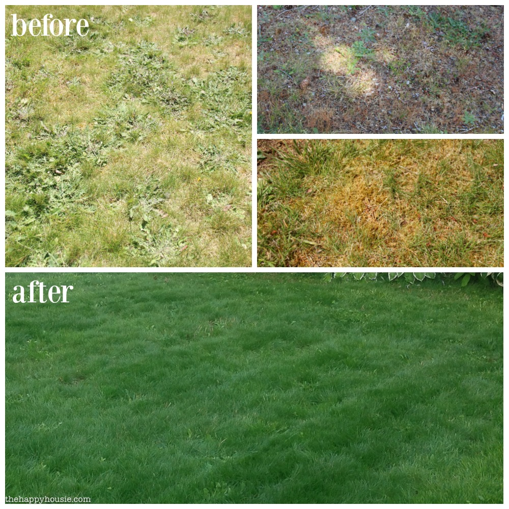 Dark After Our Lawn Makeover Project Scotts Before After Lawn Makeover Project Happy Housie Scotts 4 Step Program Cost Scotts 4 Step Program Menards Before houzz 01 Scotts 4 Step Program