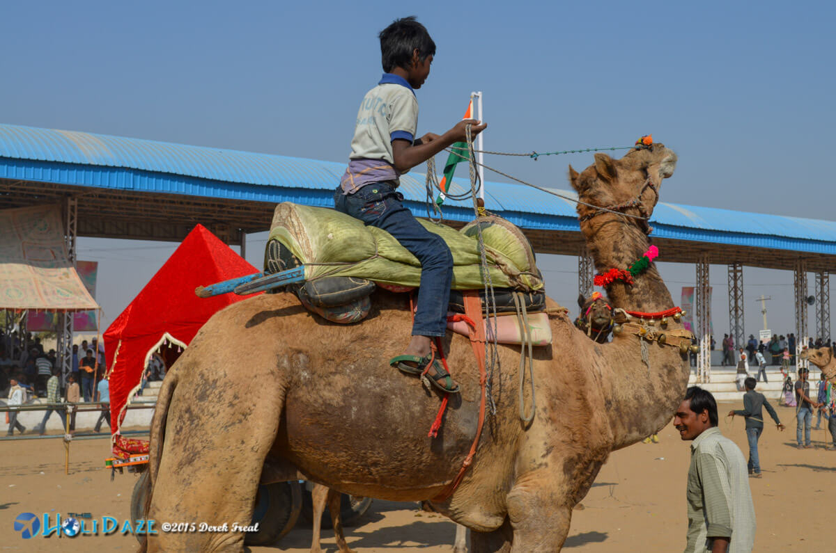 Kid riding a camel at the Pushkar Camel Fair 2015