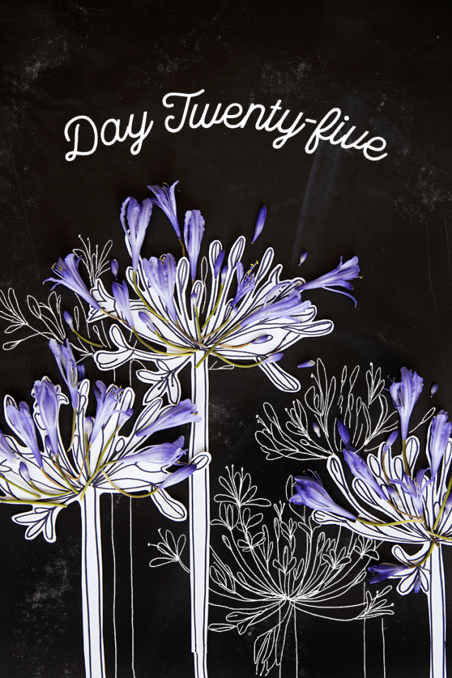 how to draw an agapanthus