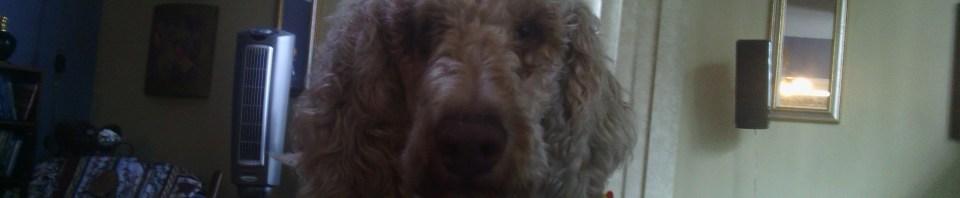 "R.I.P. Chewbacca ""Chewie"" Hutchison, 2009-2013"