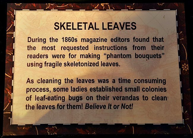 Skeletal Leaves - The Hypertufa Gardener