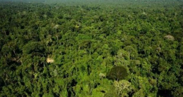 Aerial-view-of-the-Amazonic-forest-reserve-AFP_0