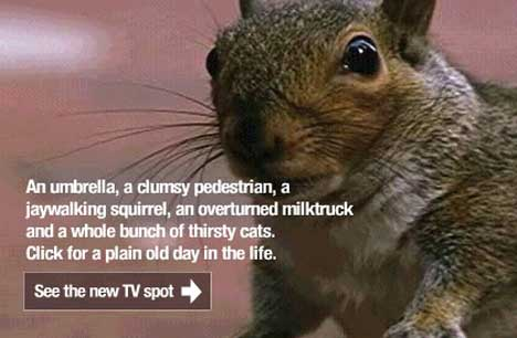 Discovery Channel Squirrel in TV advertisement