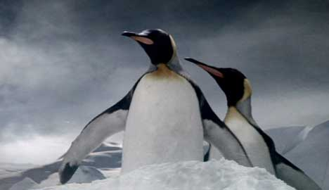 Penguins find their way in Guinness TV ad