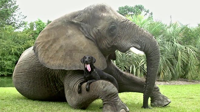 Android Friends Furever Dog and Elephant