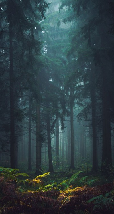 Misty Forest - The iPhone Wallpapers