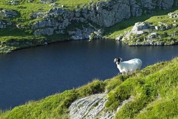 3 Day Adventure Tour – Wild Wexford & Wicklow