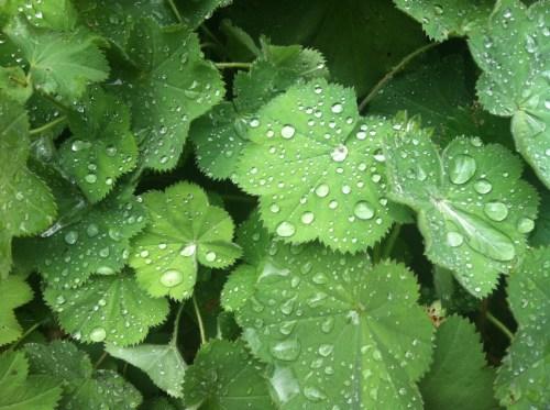 Dew at The Cloisters, Jade Dressler