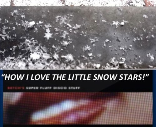 HOW I LOVE THE LITTLE_SNOW_ STARS_Jade_ Dressler