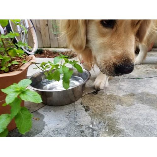 Medium Crop Of Dog Not Drinking Water