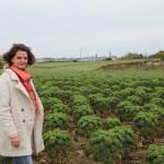 TKP-Legumes Project