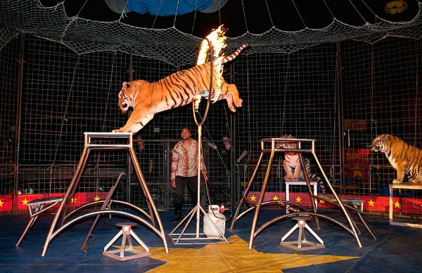 Tadmor Tigers