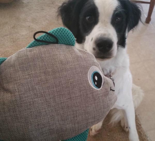 dog treats and toys