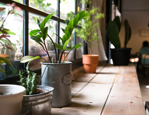 the best houseplants to have